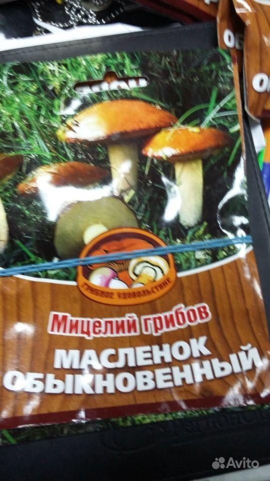 Семена грибов купить на Зозу.ру - фотография № 4
