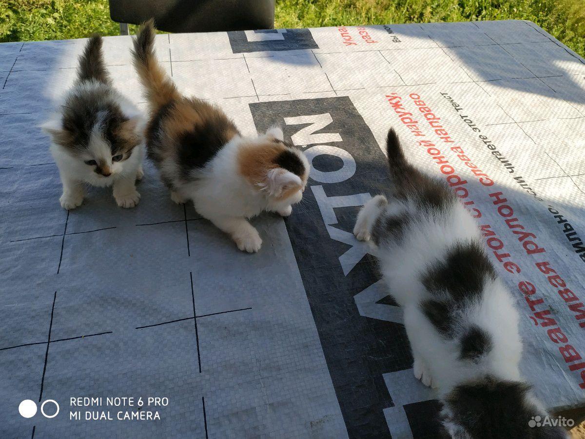 Котята в подарок в Санкт-Петербурге - фотография № 4