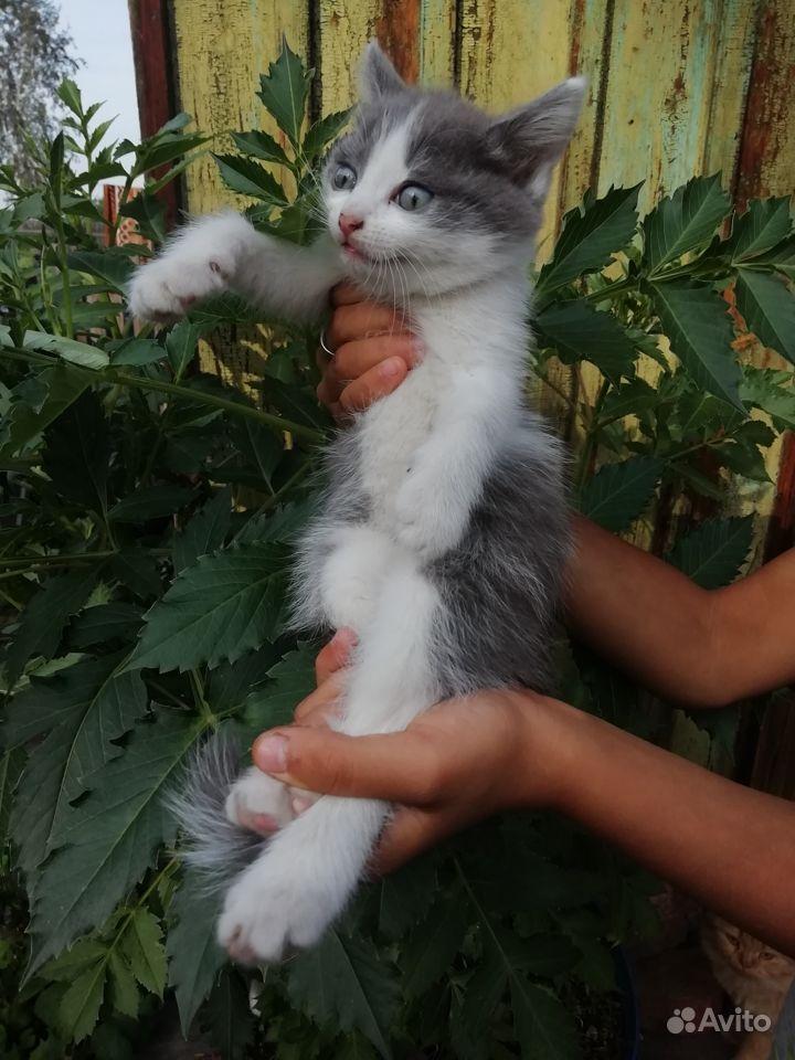 Отдам котейков в добрые руки кушают сами 1.5 месяц
