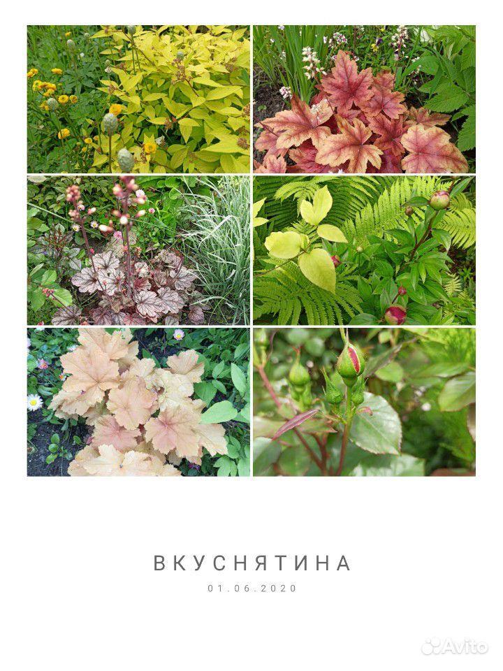 Саженцы купить на Зозу.ру - фотография № 9