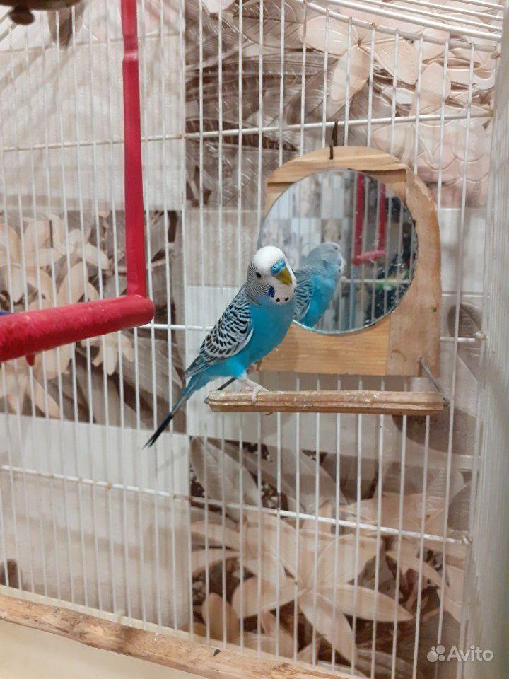 Попугай купить на Зозу.ру - фотография № 2