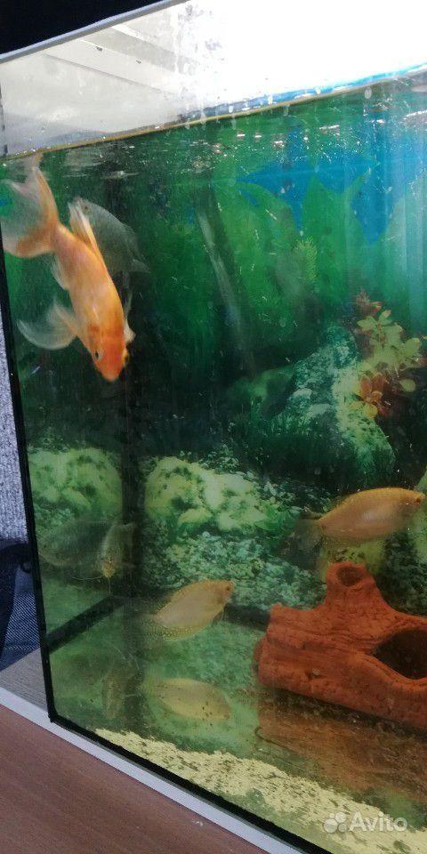 Рыбки большие купить на Зозу.ру - фотография № 2