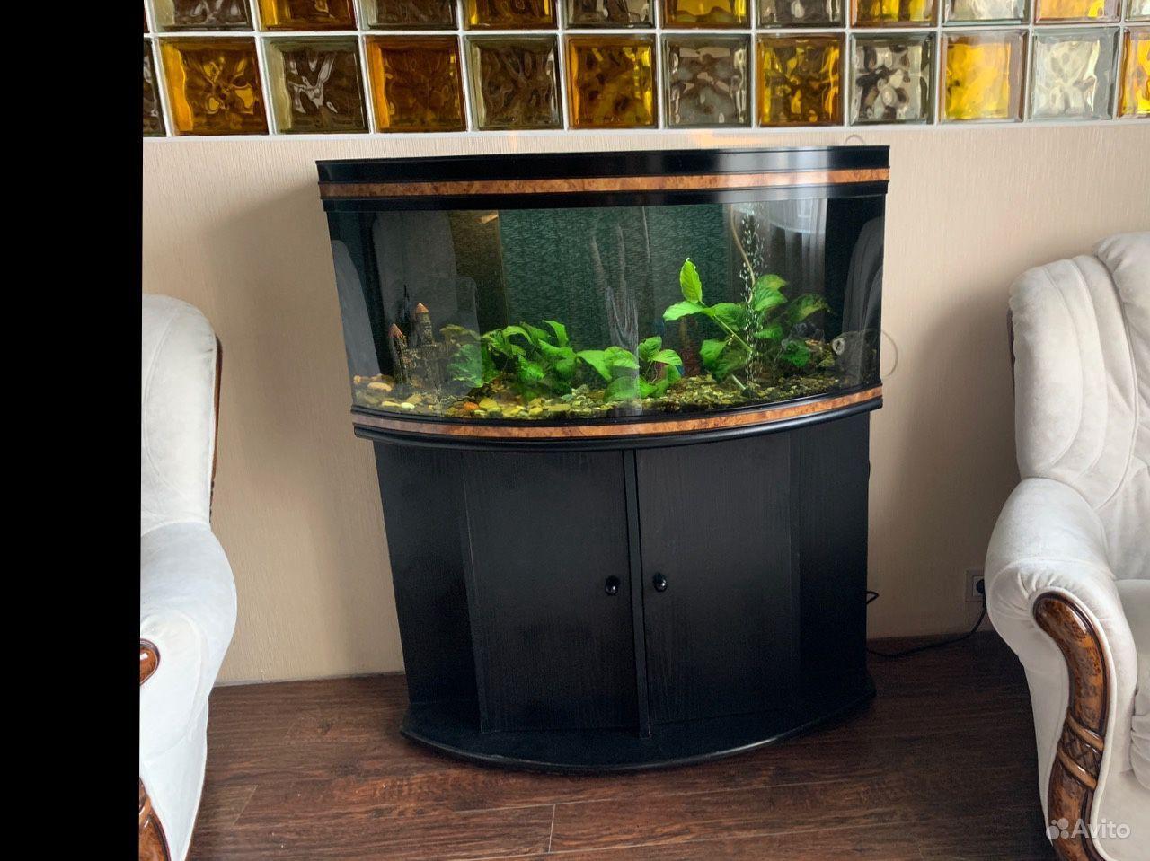 Панорамный аквариум 200л, укомплектован, Франция купить на Зозу.ру - фотография № 1