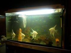 Купить аквариум на авито в москве частные объявления частные объявленияна газель
