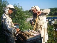 Продам цветочный мёд с личной пасеки
