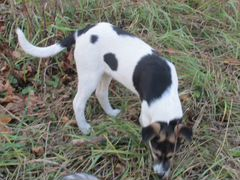 Собака 11 месяцев девочка