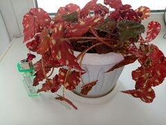 Кактусы и комнатные цветы
