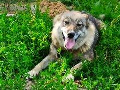 Собака Юля осталось без хозяина
