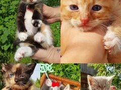 Отдадим котят в добрые и заботливые руки