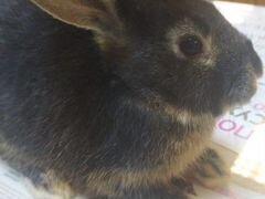 Отдам кролика в добрые руки с большой клеткой