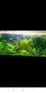 Pacтения для аквариума объявление продам