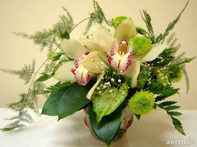 Авито купить цветы волгоград купить цветы для дома d cjkbujhcr