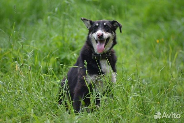 Ляля - собака из приюта с милым носиком купить 2