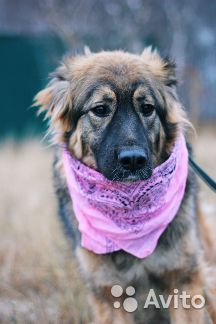 Пушистая собака в дар купить на Зозу.ру - фотография № 9