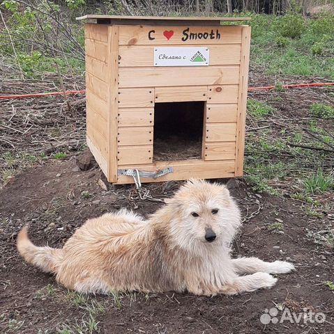 Собака 89635001357 купить 1