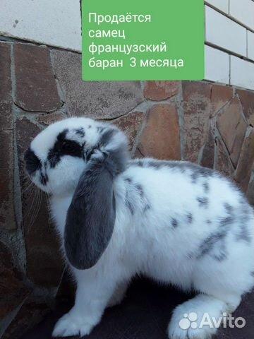 Кролики 89202417955 купить 2