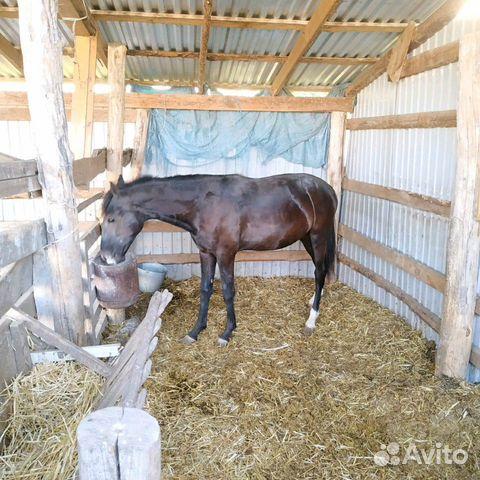Лошадь  89280884007 купить 6