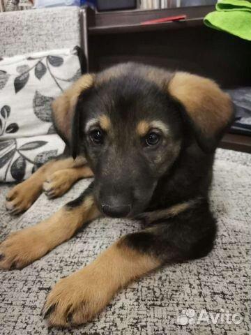 Собака  89834665189 купить 1