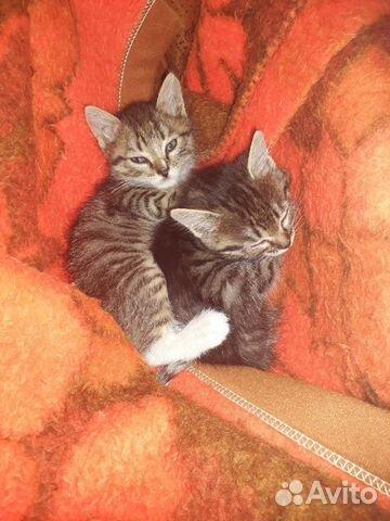Милые котята ищут родителей  89992093964 купить 5
