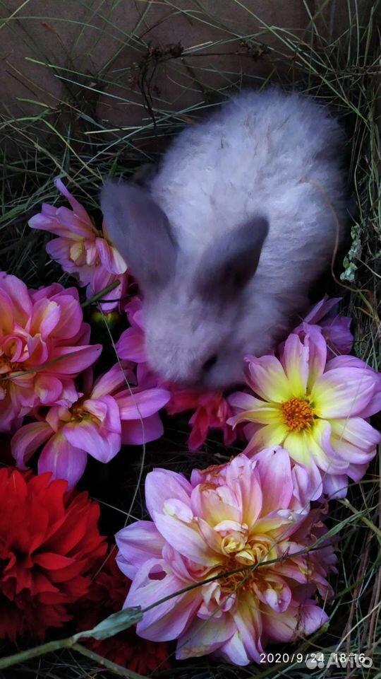Кролики разных пород  89887675229 купить 7