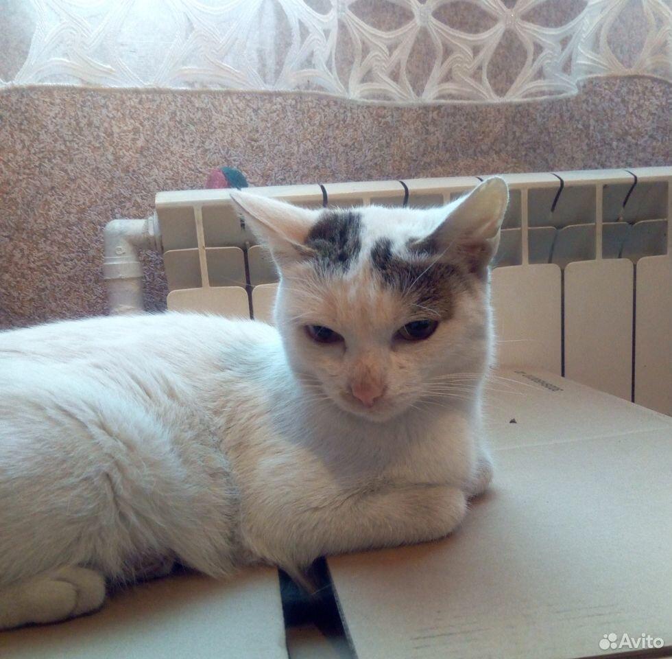 Gebe eine Katze  89234676953 kaufen 2