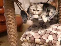 Когтеточка и домик для кошки