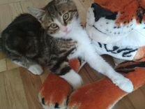 Котенок (котик)