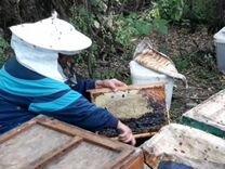 Мёд подсолнечника помесь с цветочным
