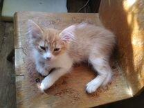 Котёнок девочка Кнопочка