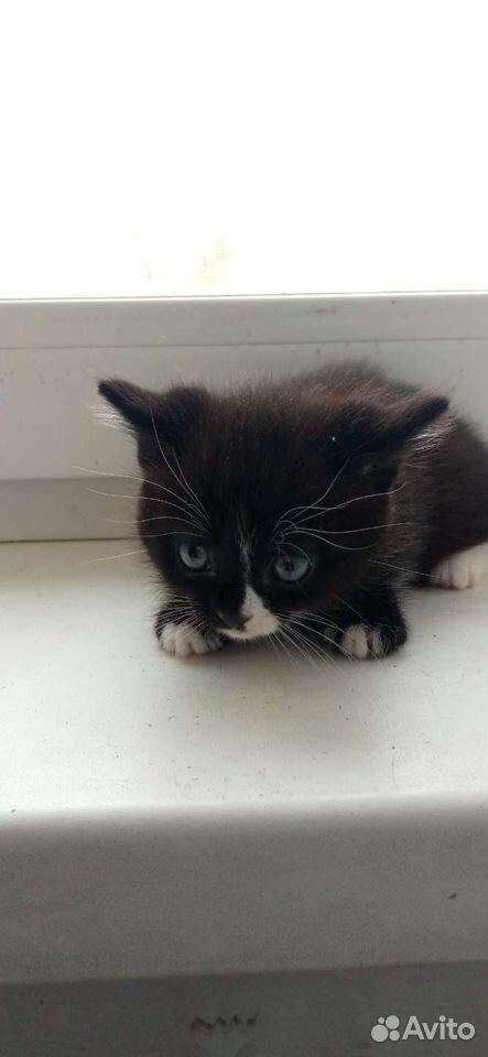 Кошка  89059831610 купить 4