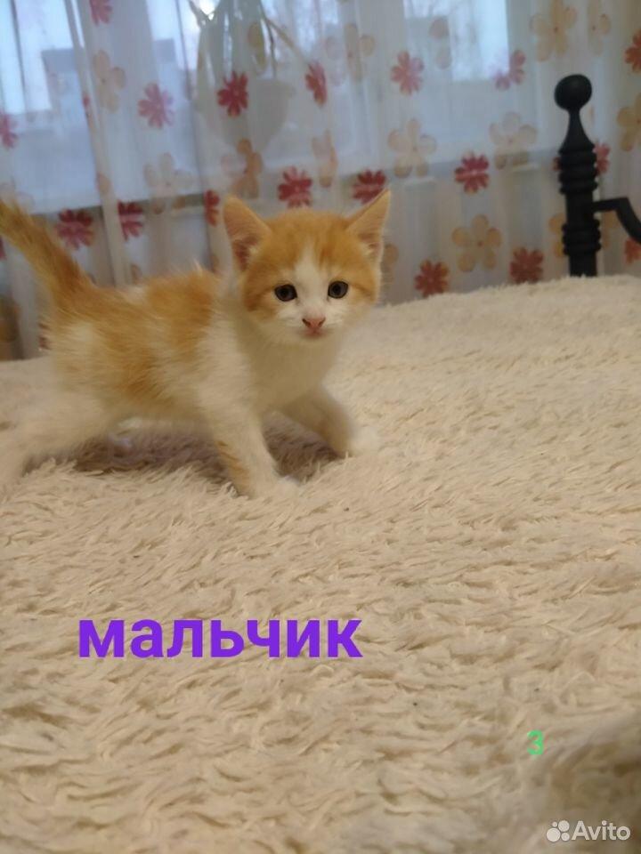 Отдам миленьких котят  89039946144 купить 7