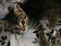 Отдадим котят в добрые руки Котята очень воспитанн