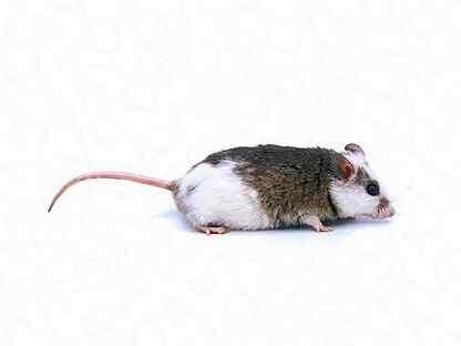 упаковки чуть фото мышки бегунок третьей- адекватная красивая