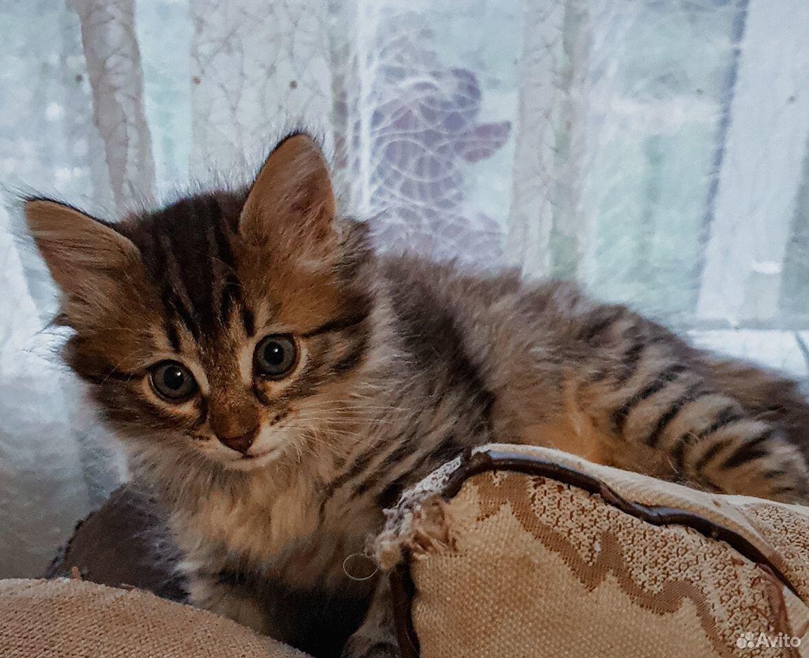 Кошка  89101089693 купить 1