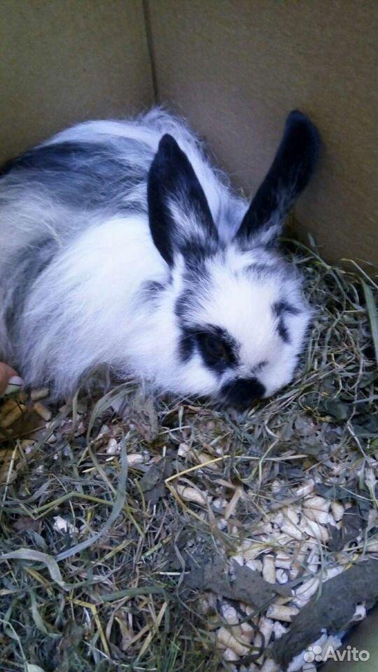 Кролик  89107196111 купить 1