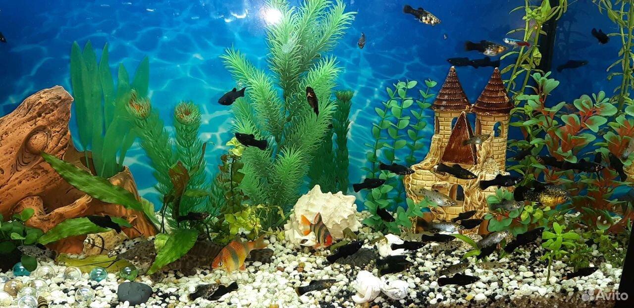 Аквариумные рыбки  89511423093 купить 2